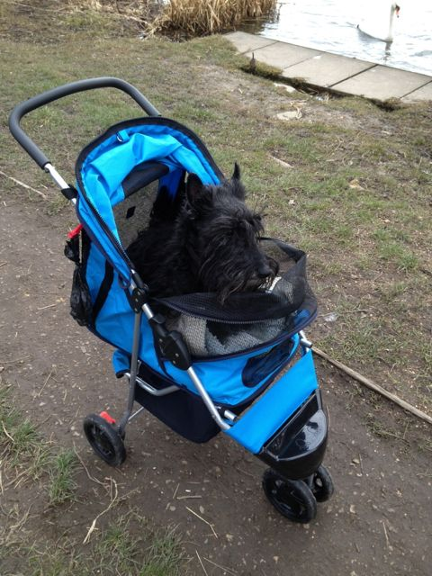 Finlay in his new stroller