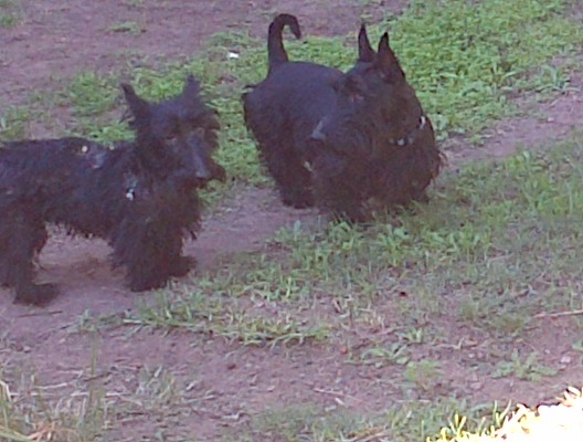 Dougal and Haemish (on the right)