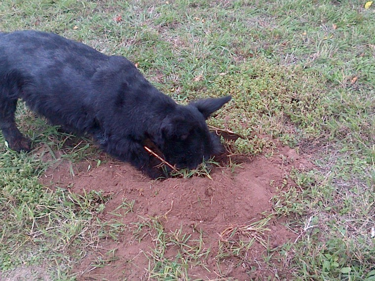 Mackie, digging her way to Australia!