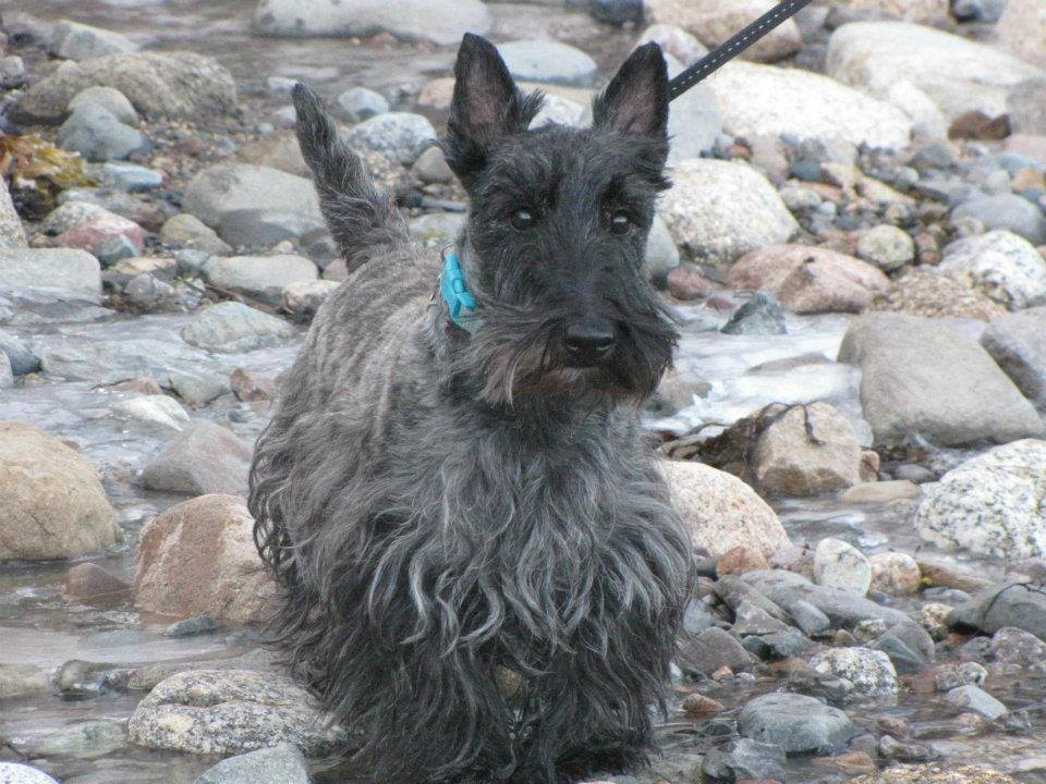 Willi, enjoying a little paddle