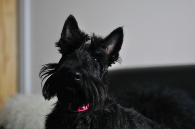 Barbara Boyce Maisie 25 3 2012