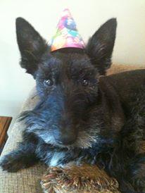 kyla hatfield roark Sammy 8th birthday