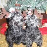 23 beth christiansen with caroling scotties
