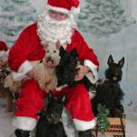 31 Carrie Smith with Duncan Abigail and Oliver with Santa