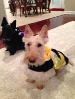 kyla hatfield roark teddy the bumble bee