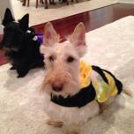 kyla hatfield roark teddy the bumble bee