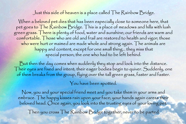 Rainbow Bridge Poem Scottish Terrier Health Network