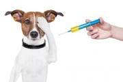 vaccine dog